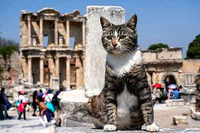 Cats in Ephesus